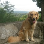 Learning From Improv: Lessons For Your Dog And You