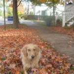4 Signs of Fall – Wordless Wednesday