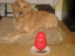 Honey the golden retriever poses with Only Natural Pet dog food.