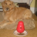 If You Love Your Dog Food, Why Try Something New? – #PawNatural Review
