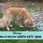 Death Kitty 2000