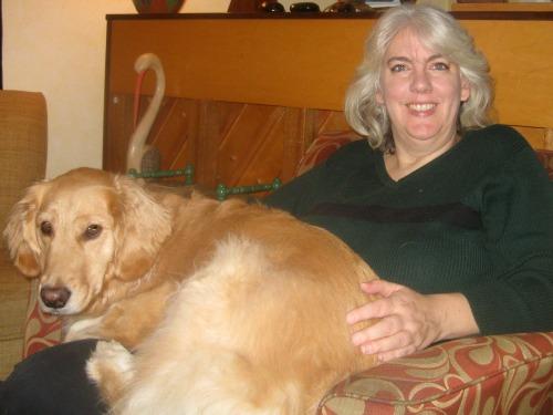 Honey the golden retriever sits on my lap.