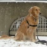9 Things I Wish My Dog Would Teach Herself