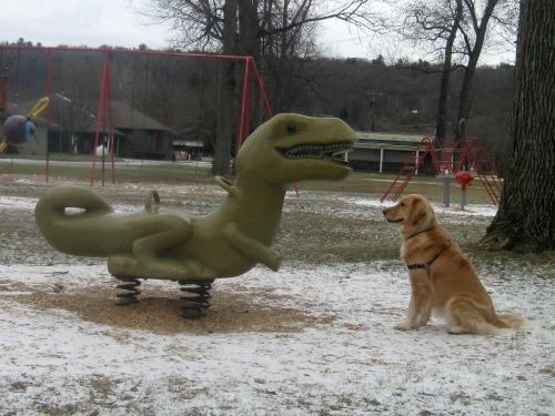 Honey the golden retriever looks at a dinosaur.