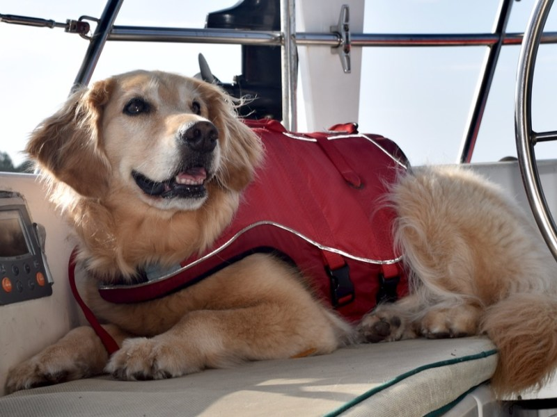 You need to get your dog a life jacket. Here are 10 reasons why. And tips for getting the right life jacket for your dog.