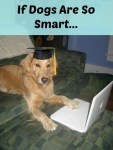 Honey the golden retriever with computer wearing a mortarboard hat.