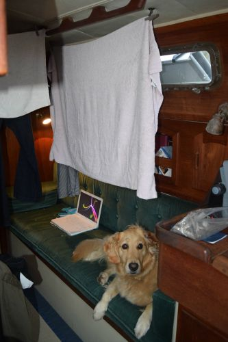 Honey the golden retriever waits for laundry to dry on the boat.