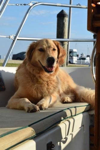 Honey the golden retriever sun bathes at the dock.