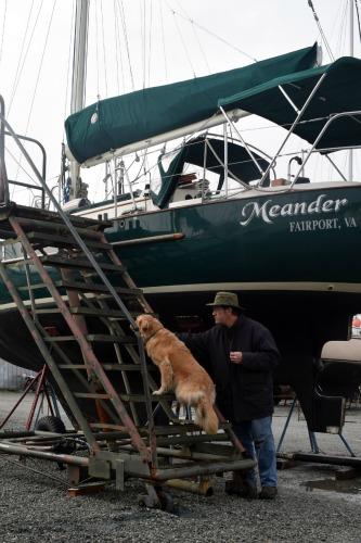 Honey the golden retriever - will she climb the boat stairs?