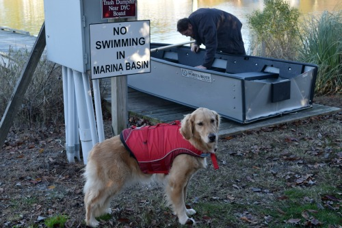 Honey the golden retriever while dinghy is being assembled.