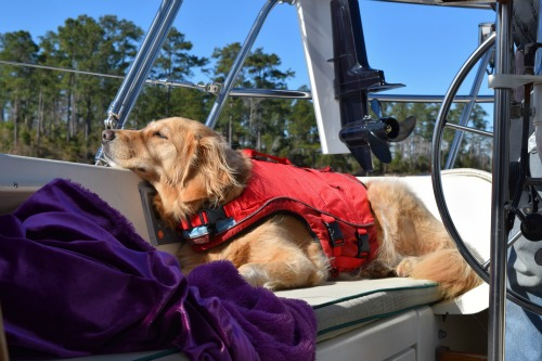 Does your dog need a life jacket?
