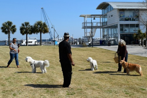 Meeting the Doodle family at the Charleston maritime center.