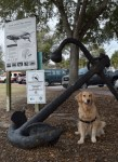 Honey the golden retriever poses with an anchor in Beaufort Waterfront Park.