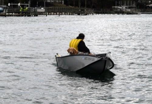 Honey the golden retriever rides the dinghy to shore.