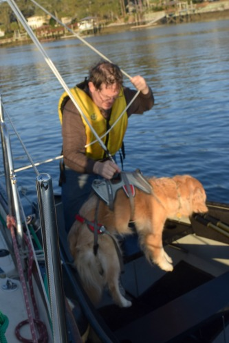 Honey the golden retriever lands in the dinghy.