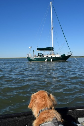 Honey the golden retriever is relieved to see Meander at anchor.