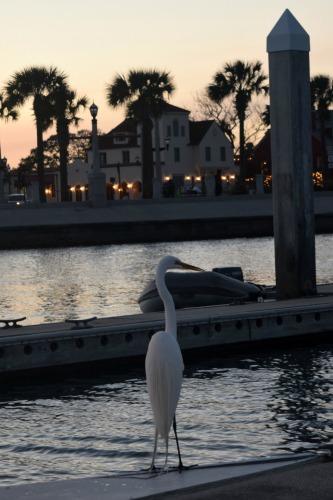 Egret on the docks at St Augustine.