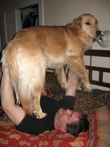 Mike bench presses Honey the golden retriever.