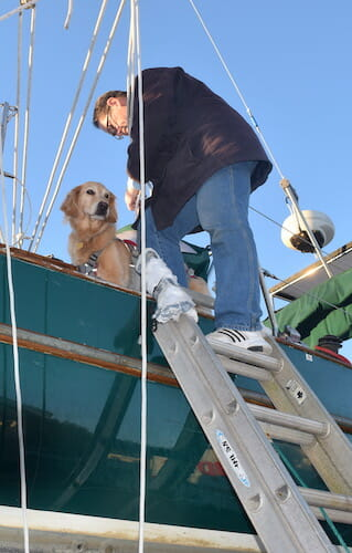 Honey the boat dog gets ready to be lowered from Meander.