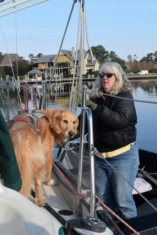 Honey the boat dog prepares to fly into the dinghy.