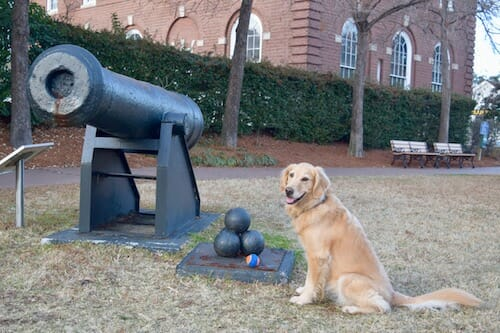Build your dog's confidence (Golden retriever sits near cannon and cannon balls)