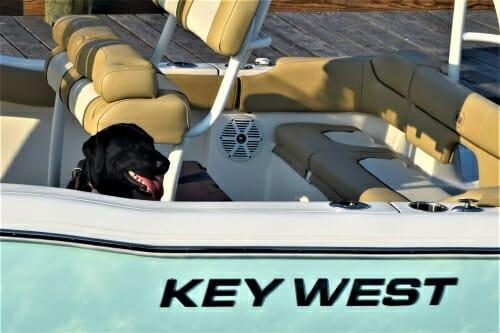 Black dog waiting in boat.