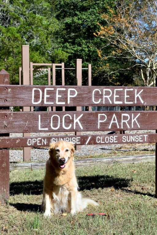 Golden retriever in front of sign for Deep Creek Lock Park.