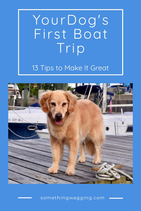 Dog's first time on a boat - 13 tips to make it great.