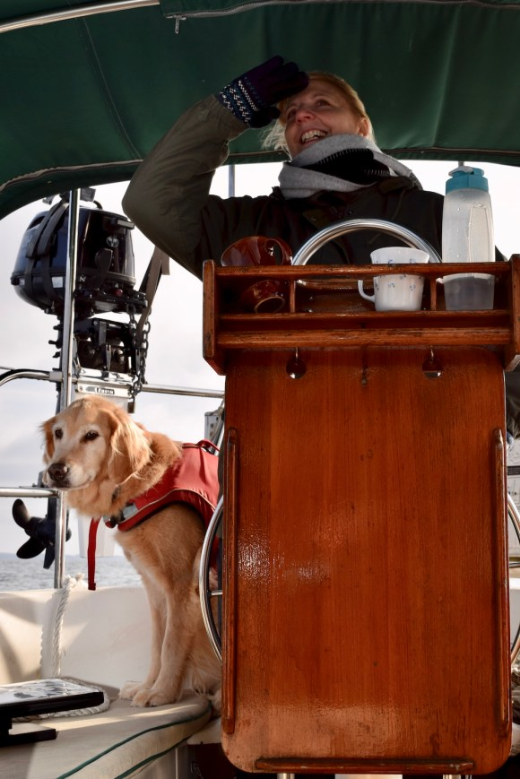 Golden retriever dog in cockpit of sailboat with first mate. It's not this dog's first time on the boat.