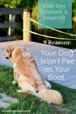 Not every boat dog will pee easily on your cruising boat. Here are some reasons why along with solutions.