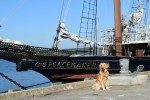 Choose a boat-themed dog name (Golden retriever in front of sailboat)