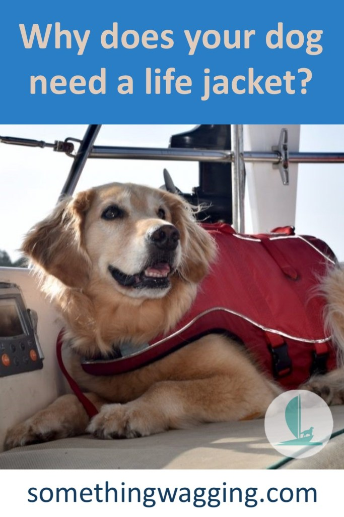 10 Reasons why EVERY dog needs a life jacket. (Golden retriever with life jacket on boat).