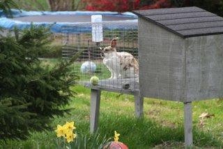 The bunny next door