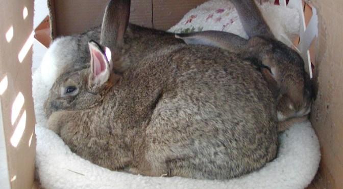 5/24/07 Mid-week bunny fix