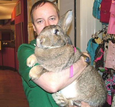 Big bunny fix