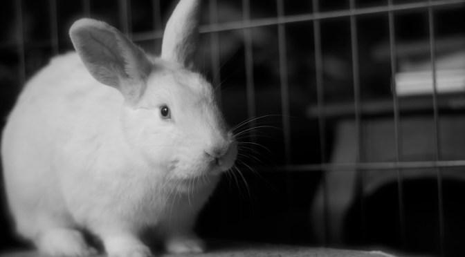 A bunny, on loan