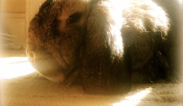 Mid-week bunny fix