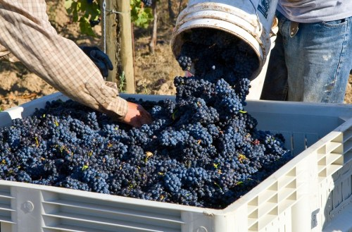 California Merlot Tasting Notes | Tim Smith | SommelierQA.com