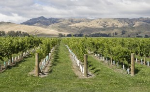 What is Marlborough Sauvignon Blanc? | Marlborough Wine Region | Marlborough Sauvignon Blanc Recommendations