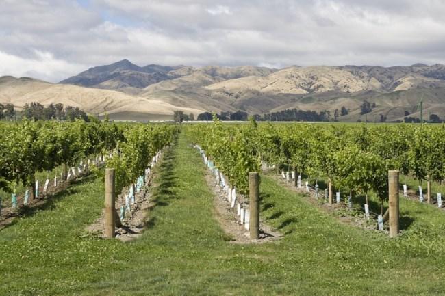 What is Marlborough Sauvignon Blanc?   Marlborough Wine Region   Marlborough Sauvignon Blanc Recommendations