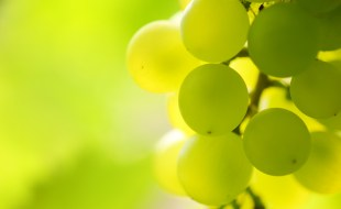 What is Pouilly-Fumé? | Loire Valley, France - Sauvignon Blanc | Adam Chase, SommelierQA.com