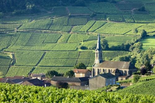 The Best Pinot Noir Food Pairings | Pinot Noir Vines at Vergisson Vineyards Burgundy, France