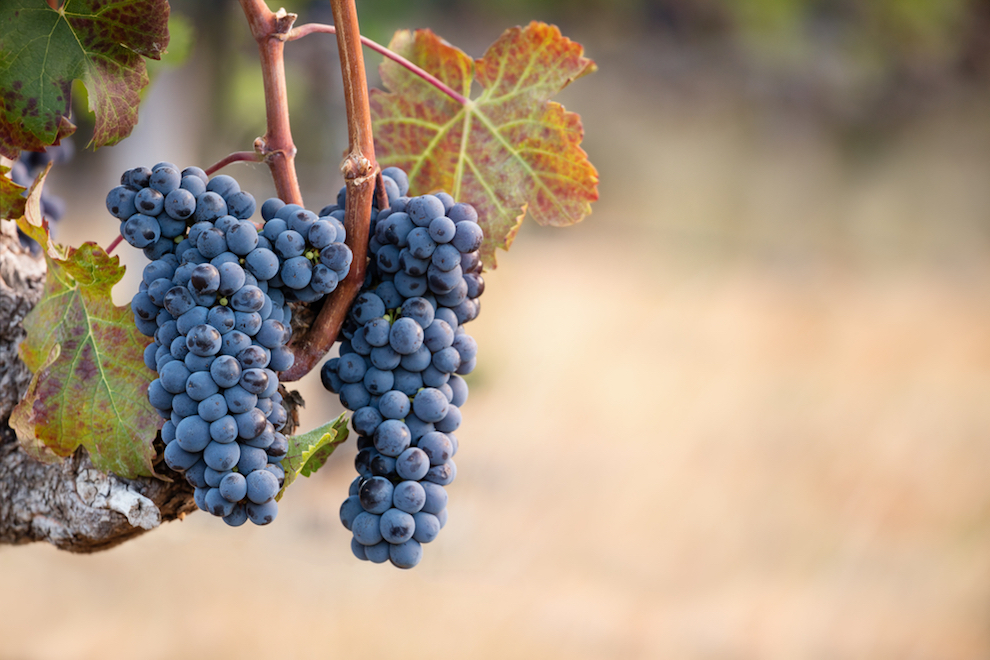 What is Cabernet Franc? What Does Cabernet Franc Taste Like? | Cabernet Franc Food Pairings