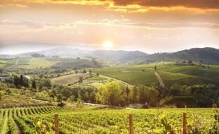 What is Sangiovese Wine? Sangiovese and its Relationship to Brunello di Montalcino and Rosso di Montepulciano