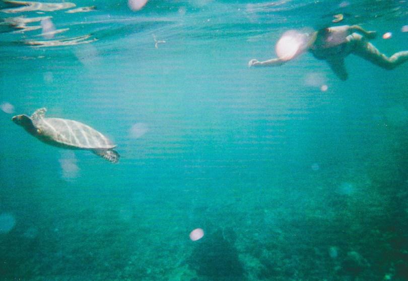Gili-Meno-Schildkröte