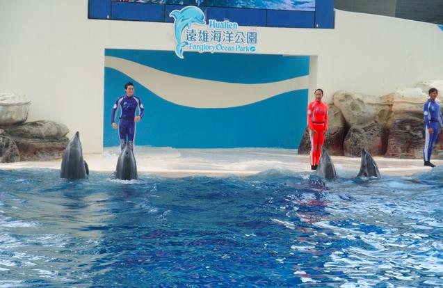 花蓮一日遊,來看海豚表演!