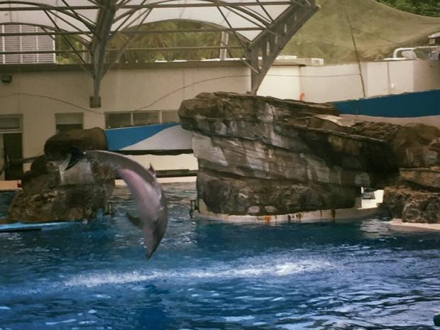 親子旅遊行程-海豚秀