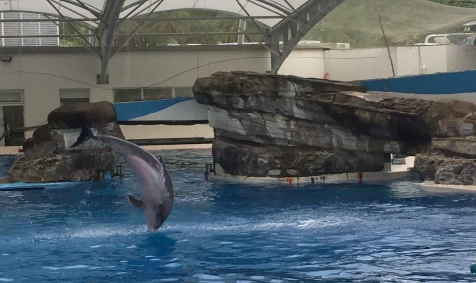 2017花蓮怎麼玩?精彩海豚表演秀