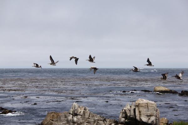 Albatrosser däremot.