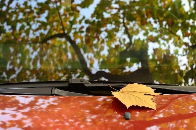 a-fallen-leaf